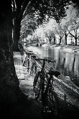 Bokeh@Kö, Düsseldorf 2018 Summer 9 (Amselchen) Tags: bnw blackandwhite mono monochrome light shadow bokeh blur dof depthoffield bike bicycle trees water season summer sony a7rii sonyilce7rm2 sigma sigmamc11 30mmf14dchsm|art