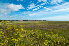Pegwell Bay Country Park 1643 (Kent Country Parks) Tags: summer autumn spring pegwellbay country countryside kentcountryparks kent