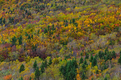 Mountain scenery at autumn in Japan (phuong.sg@gmail.com) Tags: asia autumn background beautiful beauty brown china color colorful country deciduous environment fall fir foliage forest golden green hill kyoto landscape leaf mountain multicolored nagano natural nature nikko orange outdoor park pattern red scenery scenic season sichuan slope taiwan tourism travel tree varicolored view wood yellow