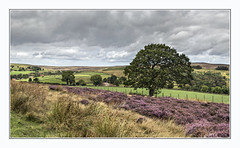 Picturesque Commondale (Katybun of Beverley) Tags: commondale northyorkshiremoors northyorkshire moors mmorland landscape heather