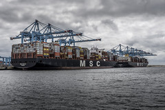 APM Container terminals at Rotterdam Harbour Maasvlakte II (Dannis van der Heiden) Tags: ship vessel water amaliahaven sky container terminal containerterminal containers msc rotterdam d750 apmterminals apm nikond750 tokina1628mmf28 mscsveva maersk netherlands