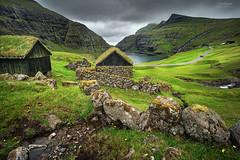 'Cow Rubs' - Saksun, Faroe Islands (Gavin Hardcastle - Fototripper) Tags: faroe islands cows sheep farm saksun village grass green moss fields valley glen meadow mountains