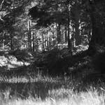 Black Woods of Rannoch 7 thumbnail