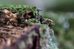 Decay (mpalmer934) Tags: macro mondays decay picnic table moss nail wood bokeh