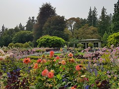 The Italian Garden in bloom (walneylad) Tags: victoria britishcolumbia canada august summer view scenery nature colwood hatleycastle hatleypark grounds park garden italiangarden flowers plants lawn grass trees hedges leaves colour color green brown blue pink violet yellow royalroads