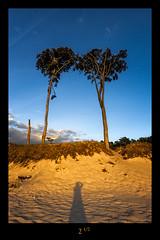 Selbstportrait (Rukiber) Tags: ostsee dars fischland natur mecklenburgvorpommern meer nikon d750 christian kirsch rukiber urlaub reisen sonnenuntergang sunset