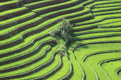Terraced rice paddy field landscape of northern Vietnam (Frans.Sellies) Tags: img8573 rice paddy vietnam mucangchai