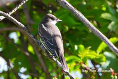 IMG_6808 (nitinpatel2) Tags: bird nature nitinpatel