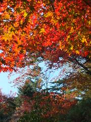 a (53) (hiromi89) Tags: japan beauty beautiful scenery flower wood pond