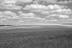 here's where they buried the spaceship (onlygwuk) Tags: monochrome blackandwhite landscape wheat grain fields cambridgeshire england pastoral farmland countryside clouds