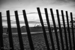 Beach-Side @ Santa Monica Leica M Monochrome (CCD) (bryanasmar) Tags: leica m monochrome ccd plus ltm canon 352 merry goround santa monica beachside ngc ferris wheel pier m240 zeiss c sonnar 5015 color t 1 550 zm 5 50mm m9 f15 portrait people kids children classic depth field photo border bokeh surreal texture serene