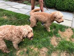 Lyric's Tucker with his uncle Yogi!