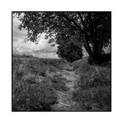 painter's trail • auvers-sur-oise, france • 2016 (lem's) Tags: trail fields trees arbre chemin champs peintre painter auvers sur oise france rolleiflex planar