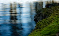 Bed of Moss (jeelnaic) Tags: landscape landscapephotography lake sigma nikon nikonphotography seascape winter wintercolors canberra australia afternoon