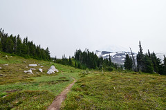 (nnylyssim) Tags: rainier mountains hike national park wilderness forest meadow wildflowers