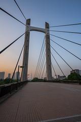 Kiba Park Bridge (akiharukas) Tags: park city tokyo japan sony a7riii wideangle cityscape architecture blue sky skytree magic hour dark