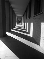 columns and windows (lrodigu) Tags: columns windows blackandwhite bw noiretblanc