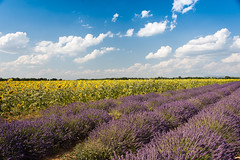 Francia-Provenza-2018-114 (gigifotodoc) Tags: 2018 francia provenza vacanze fiorir lavanda paesaggio valensole provencealpescôtedazur