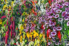 Petunia's Love Lay Asunder (Paul B0udreau) Tags: nikkor1855mm photoshop canada ontario paulboudreauphotography niagara d5100 nikon nikond5100 grimsby coles layer flowers collage