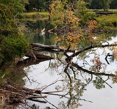 Pond and Trees (Jacques P Raymond) Tags: calgary alberta canada ca inglewoodbirdsanctuary trees pond water yellowleaves reflections