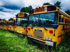 Transits awaiting the scrapper's blade (jimross90) Tags: schoolbus transit amtran thomas bluebird