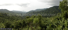 41639 Panorama of hills and forest from the Kiew Krating viewpoint, Mae Wong National Park, Thailand. (K Fletcher & D Baylis) Tags: panorama hills mountains forest view viewpoint scenery kiewkrating maewong nationalpark kamphaengphet thailand asia july2018