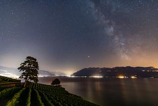 Les vignes et les étoiles  |  The vineyards and the stars