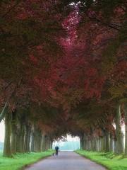 Morning walk (juliendumont2) Tags: tree trees treetrunk trunk red purple folliage mist fog road colors colorful landscape people outdoor nature naturephotography inexplore greenscene belgium fineart canon