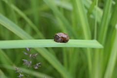 nap time (Spacepeople13) Tags: snail nap sleep sleepy macro outdoors d3300
