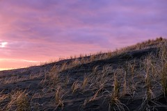 (patricia danielle) Tags: newzealand auckland karekare landscape nature fujifilmxe3 fuji35mmf2 sky sunset grass sand dunes pink explore