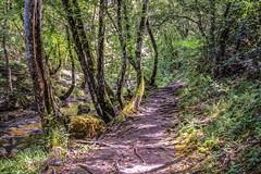 Sentier tortueux (Xtian du Gard) Tags: xtiandugard vert elisebleue fotocommunity sentier nature peinture digiart