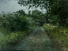 Pleased to see the rain (1 of 3) (+Pattycake+) Tags: photo trees lumixdmcgm1 landscape mulbarton field hempnall sky southnorfolk countryside outside meadows colour