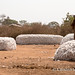 Korhogo cotton