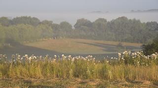 Rinder zählen im Frühnebel - es ist wieder einmal kein Tier zu sehen; Bergenhusen, Stapelholm (14)