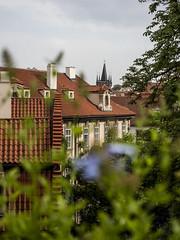 Prague 2018: Rooftops (mdiepraam) Tags: prague praha 2018 gardensbelowthepraguecastle garden zahradypodprazskymhradem rooftops dof