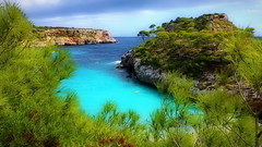 Amazing Bay (endresárvári) Tags: mallorca islasbaleares pine blue green turquoise nature summer