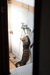 [ハチマロ通信] 水をください (moriyu) Tags: japan tokyo nikon d700 cat 猫 ニコン 東京