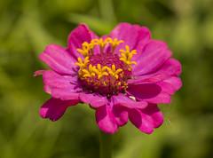 Flowers. (ost_jean) Tags: vrijbroekpark nikon d5300 tamron sp 90mm f28 di vc usd macro 11 f004n ostjean colors roos rose belgium belgie belgique mechelen