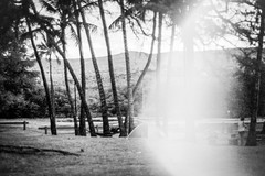One Ali'i (Minolta SRT 101) ({ chisomo }) Tags: molokai hawaii island pacific ocean small palm tree local friendly tourist beach beautiful pretty hotel resort camping halawa valley waterfall vacation 20 miles murphy make horse makehorse flowers swim 35mm film minolta