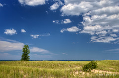 Beach Grass and a Tree (mswan777) Tags: tree 1855mm nikkor d5100 nikon michigan lake seascape landscape scenic nature outdoor white green blue cloud sky coast shore water dune sand grass