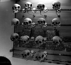 Skulls (lrodigu) Tags: skull