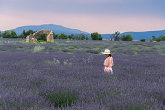 Wandering in the lavender field (simondegraipe) Tags: france sud lavender lavande valensole sunset landscape colors purple storm hat dress white flowers field