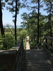KP_osprey walk (vastateparksstaff) Tags: kiptopekestatepark trails boardwalk