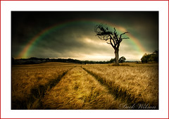 Walk in fields of Gold (Deek Wilson) Tags: field rihannatree bangor tree rainbow clouds northernireland landscape