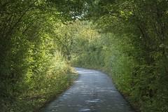 Le petit chemin (Titole) Tags: raod green greenary shades titole nicolefaton tunnel