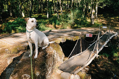 Ice the Dog guarding the RC car bridge at the campsite in Viseu (Gail at Large | Image Legacy) Tags: 2018 icethedog portugal viseu bridge campsite gailatlargecom