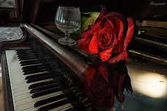 let the music play..... (flowerpower.1969) Tags: klavier piano rose blume musik melodie flower rot red bloom tastatur romantik romantisch stille