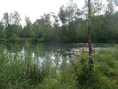 IMGP3417 (barfuss15) Tags: schweiz österreich diepoldsau alterrhein sommer summer oldrhine schwimmen badeslip wasser warm alpenrheintal