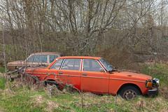 144/164 (mariburg) Tags: rotten marode ruin decay desolate derelict cars rustycars auto canoneos6d sigma35mm14dghsmart volvo