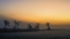 Colors of a frozen morning (Netsrak) Tags: baum dezember eu europa europe herbst landschaft morgen natur nebel sonne sonnenaufgang autumn december fall fog landscape mist morning nature sun sunrise tree trees bäume